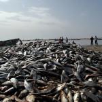 Piata-de-peste-Nouadhibou