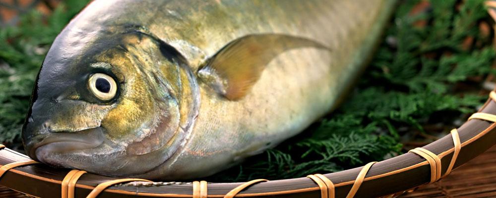 O sinteza interesanta a sectorului pescaresc din tara noastra