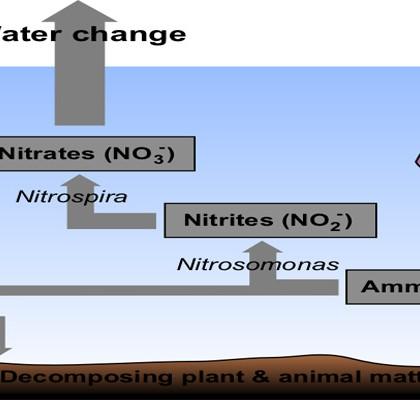Piscicultura. Calitatea apelor piscicole pentru cresterea crapului ( 2 )