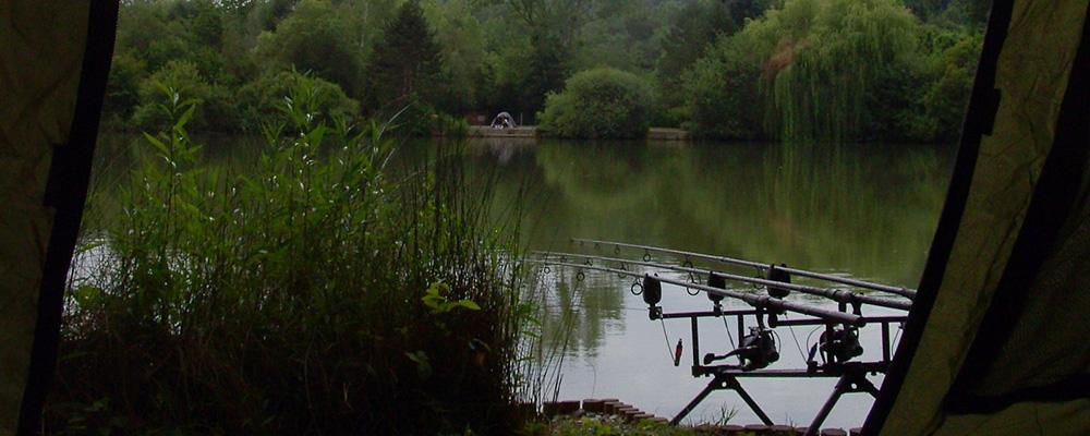 Cum se calculeaza densitatea optima de crap in iazul de pescuit sportiv ? Opinii strict personale !