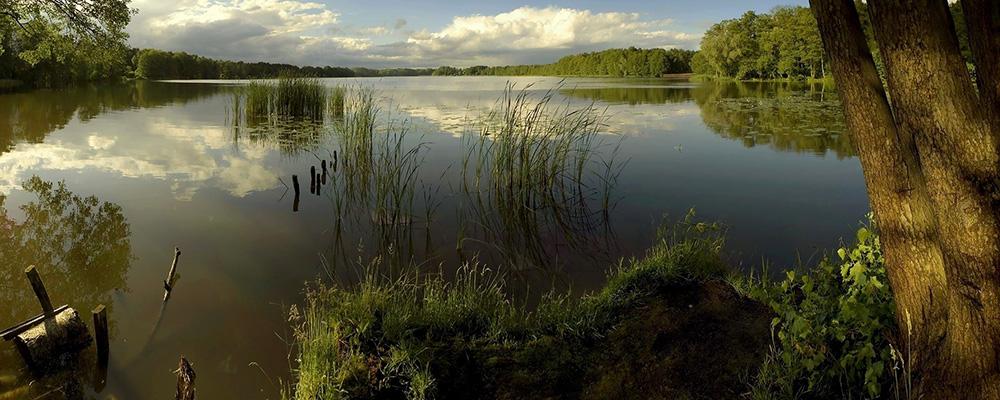 Braconajul in fermele piscicole si cele destinate pescuitului sportiv ( 4 )