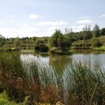 Lacul cu lini