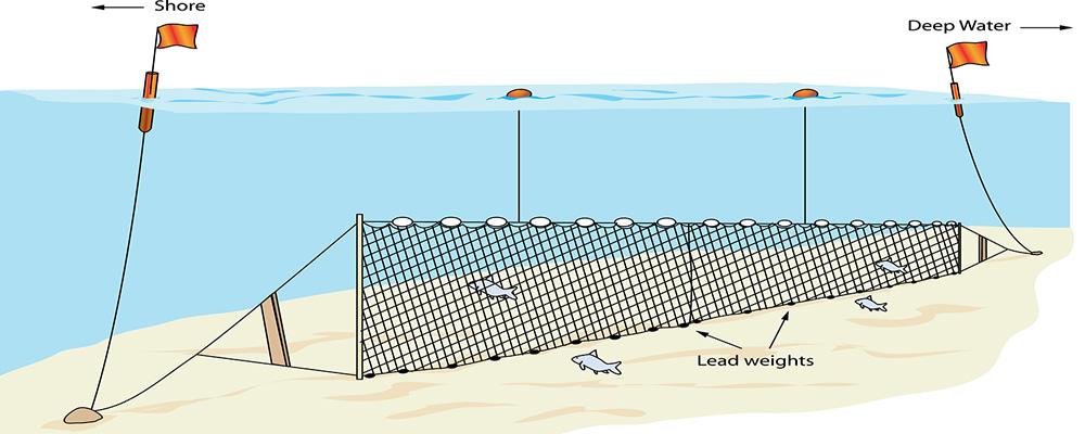 Braconierii piscicoli nu prezinta pericol social ???