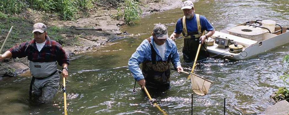 Daramarea unui mit. Pescuitul electric NU produce sterilizarea pestilor ! ( 1 )